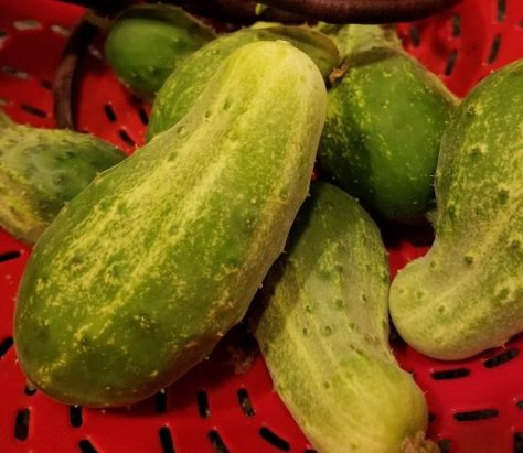 Cucumbers in a bowl.